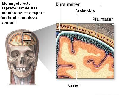 Foitele meningeale