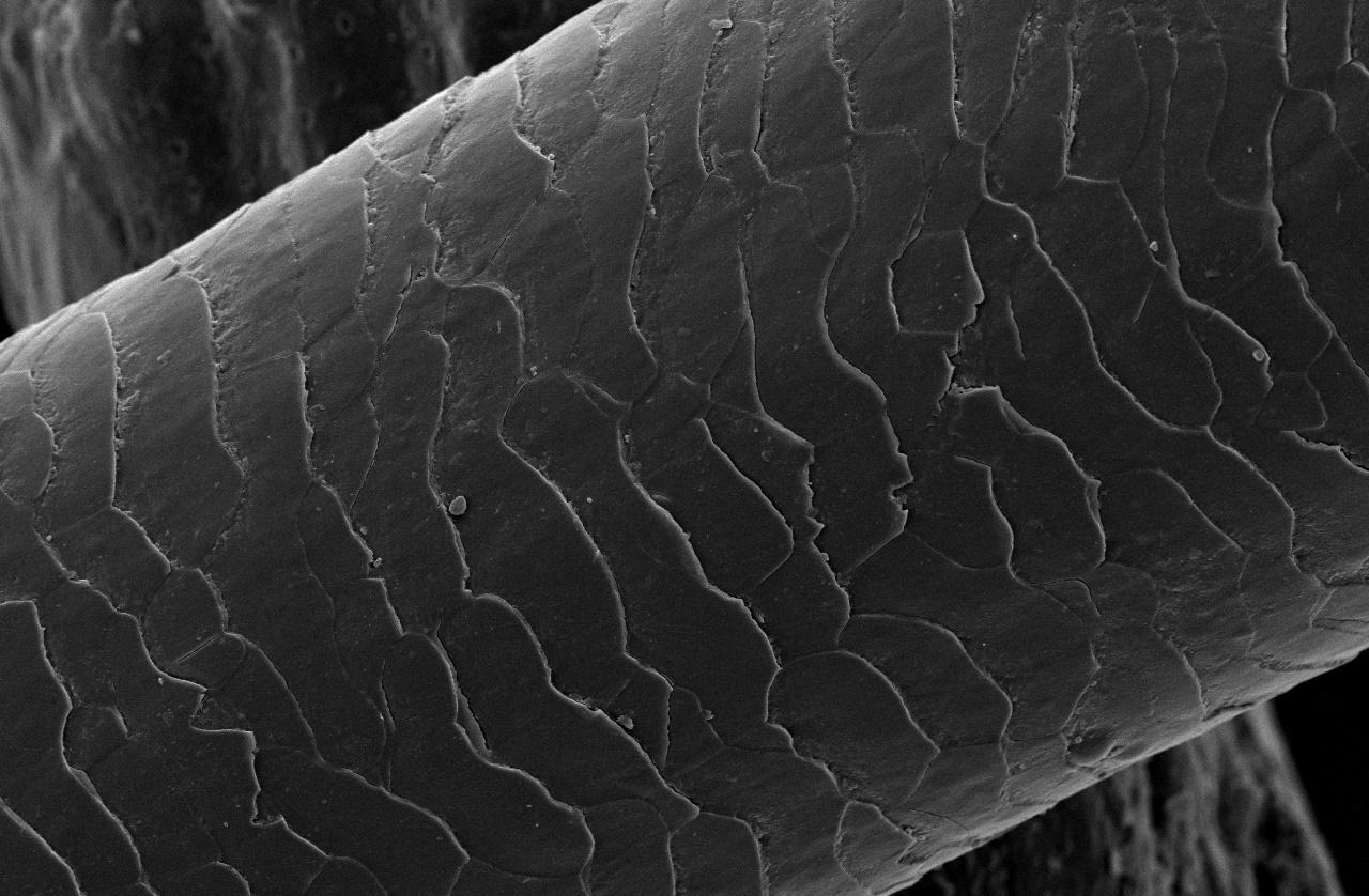 fir de par vazut la microscop