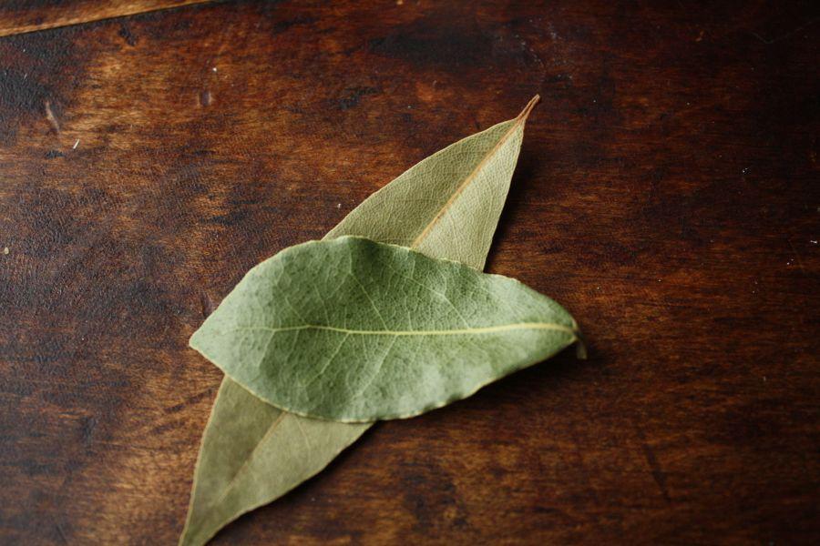 frunze de dafin și erecție erecție spontană dimineața