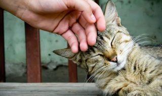pisici-terapie