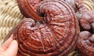 tinctura de usturoi reteta tibetana