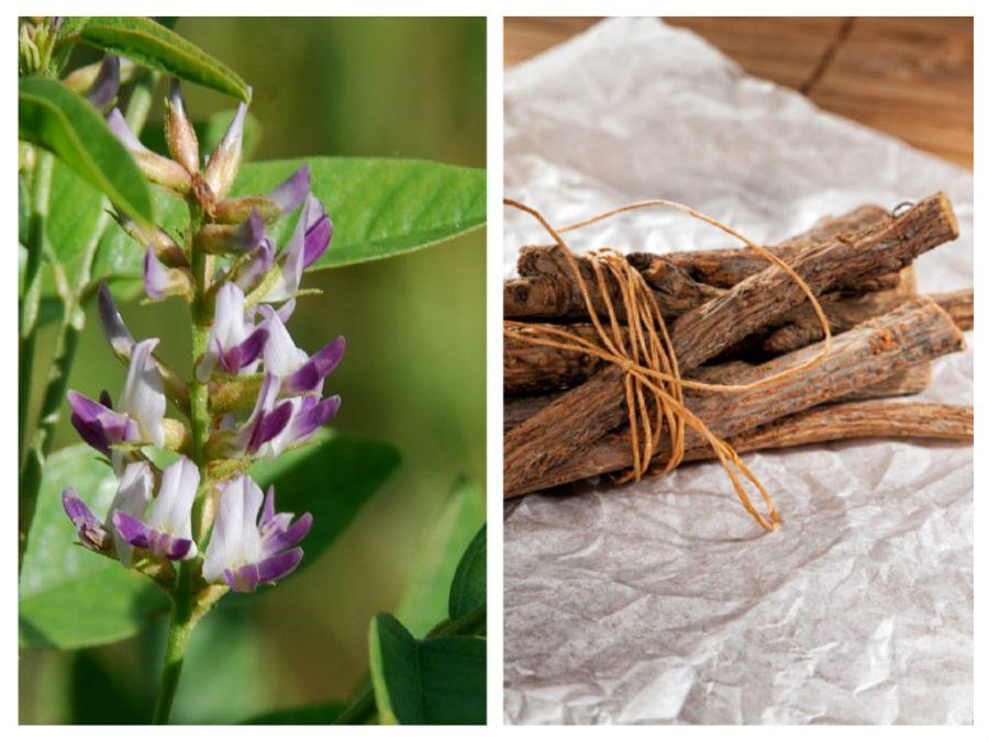 Vitamine și nutrienți în lemn dulce