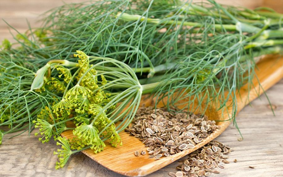Semintele de marar. 15 beneficii care te vor convinge sa le folosesti